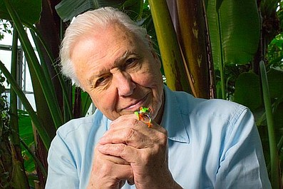 David Attenborough i życie żab
