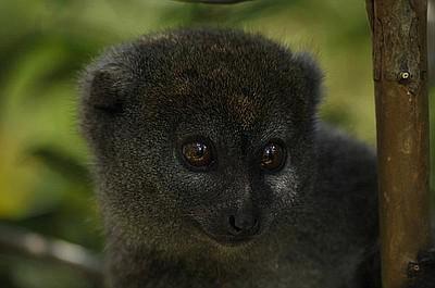 Madagaskar - zwierzęta niezwykłe