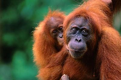 Najdziwniejsze zwierzęta świata (1)