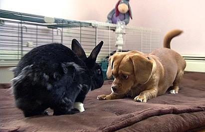 Najlepszy przyjaciel psa: Cuate i Vanda / We troje (7)