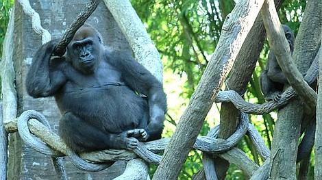 Nowojorskie Zoo - Bronx (5)